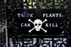 zehirli bitkiler